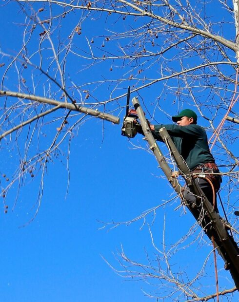 Contact Us-Lake Alfred FL Tree Trimming and Stump Grinding Services-We Offer Tree Trimming Services, Tree Removal, Tree Pruning, Tree Cutting, Residential and Commercial Tree Trimming Services, Storm Damage, Emergency Tree Removal, Land Clearing, Tree Companies, Tree Care Service, Stump Grinding, and we're the Best Tree Trimming Company Near You Guaranteed!