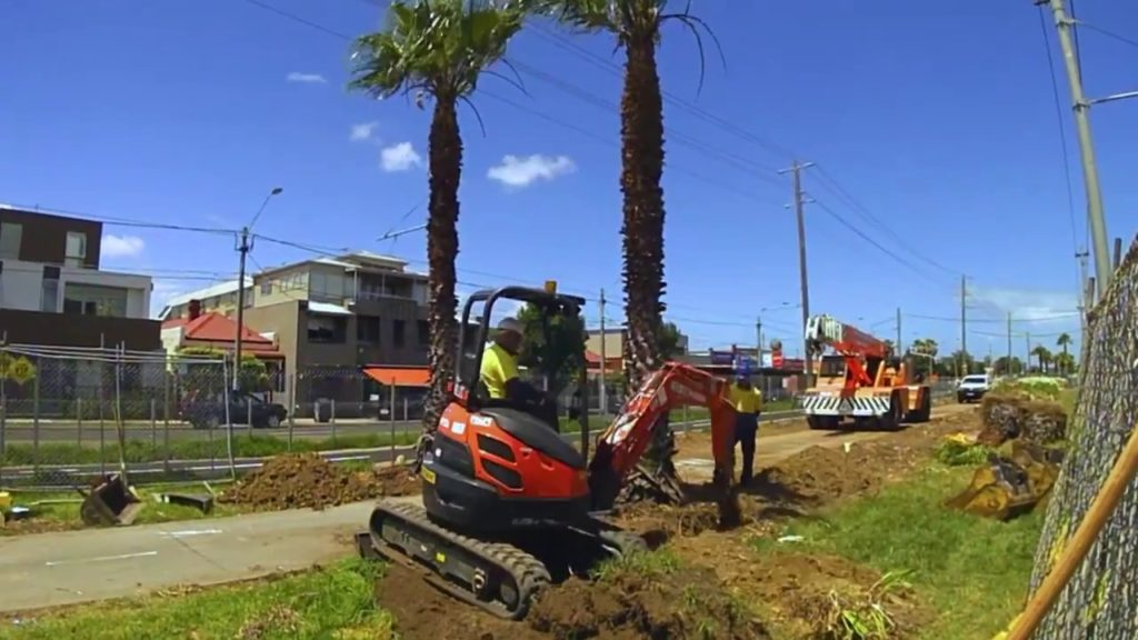 Palm Tree Removal-Lake Alfred FL Tree Trimming and Stump Grinding Services-We Offer Tree Trimming Services, Tree Removal, Tree Pruning, Tree Cutting, Residential and Commercial Tree Trimming Services, Storm Damage, Emergency Tree Removal, Land Clearing, Tree Companies, Tree Care Service, Stump Grinding, and we're the Best Tree Trimming Company Near You Guaranteed!