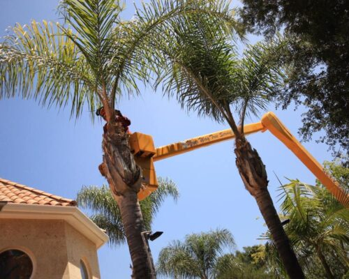 Palm Tree Trimming-Lake Alfred FL Tree Trimming and Stump Grinding Services-We Offer Tree Trimming Services, Tree Removal, Tree Pruning, Tree Cutting, Residential and Commercial Tree Trimming Services, Storm Damage, Emergency Tree Removal, Land Clearing, Tree Companies, Tree Care Service, Stump Grinding, and we're the Best Tree Trimming Company Near You Guaranteed!