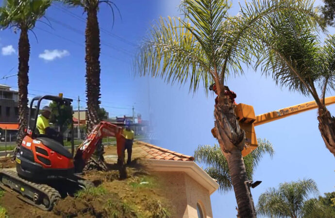 Palm tree trimming & palm tree removal-Lake Alfred FL Tree Trimming and Stump Grinding Services-We Offer Tree Trimming Services, Tree Removal, Tree Pruning, Tree Cutting, Residential and Commercial Tree Trimming Services, Storm Damage, Emergency Tree Removal, Land Clearing, Tree Companies, Tree Care Service, Stump Grinding, and we're the Best Tree Trimming Company Near You Guaranteed!