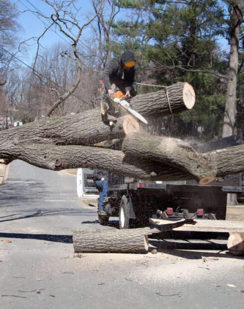 Residential Tree Services-Lake Alfred FL Tree Trimming and Stump Grinding Services-We Offer Tree Trimming Services, Tree Removal, Tree Pruning, Tree Cutting, Residential and Commercial Tree Trimming Services, Storm Damage, Emergency Tree Removal, Land Clearing, Tree Companies, Tree Care Service, Stump Grinding, and we're the Best Tree Trimming Company Near You Guaranteed!