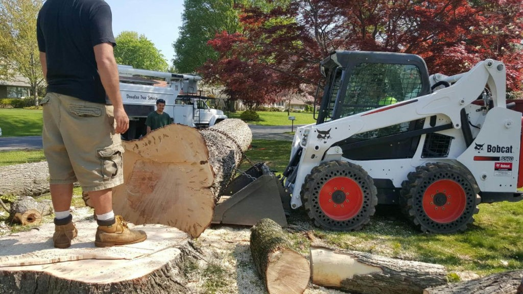 Services-Lake Alfred FL Tree Trimming and Stump Grinding Services-We Offer Tree Trimming Services, Tree Removal, Tree Pruning, Tree Cutting, Residential and Commercial Tree Trimming Services, Storm Damage, Emergency Tree Removal, Land Clearing, Tree Companies, Tree Care Service, Stump Grinding, and we're the Best Tree Trimming Company Near You Guaranteed!