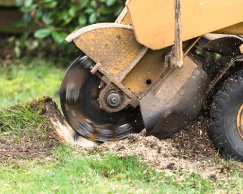 Stump Grinding-Lake Alfred FL Tree Trimming and Stump Grinding Services-We Offer Tree Trimming Services, Tree Removal, Tree Pruning, Tree Cutting, Residential and Commercial Tree Trimming Services, Storm Damage, Emergency Tree Removal, Land Clearing, Tree Companies, Tree Care Service, Stump Grinding, and we're the Best Tree Trimming Company Near You Guaranteed!