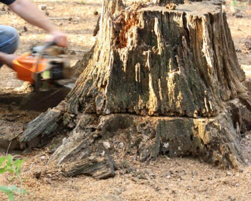 Stump Removal-Lake Alfred FL Tree Trimming and Stump Grinding Services-We Offer Tree Trimming Services, Tree Removal, Tree Pruning, Tree Cutting, Residential and Commercial Tree Trimming Services, Storm Damage, Emergency Tree Removal, Land Clearing, Tree Companies, Tree Care Service, Stump Grinding, and we're the Best Tree Trimming Company Near You Guaranteed!