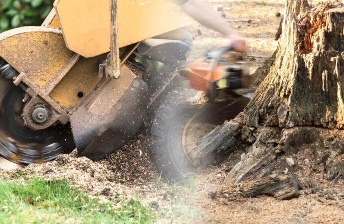 Stump grinding & removal-Lake Alfred FL Tree Trimming and Stump Grinding Services-We Offer Tree Trimming Services, Tree Removal, Tree Pruning, Tree Cutting, Residential and Commercial Tree Trimming Services, Storm Damage, Emergency Tree Removal, Land Clearing, Tree Companies, Tree Care Service, Stump Grinding, and we're the Best Tree Trimming Company Near You Guaranteed!
