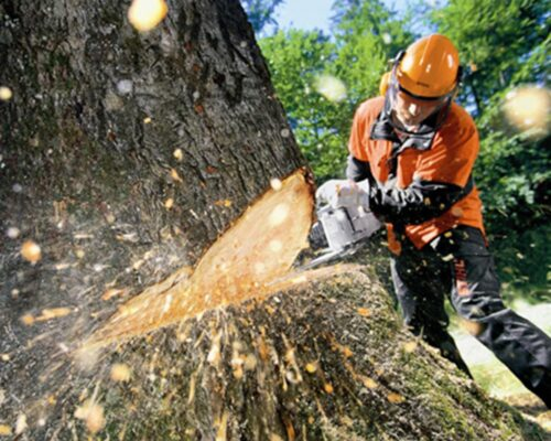Tree Cutting-Lake Alfred FL Tree Trimming and Stump Grinding Services-We Offer Tree Trimming Services, Tree Removal, Tree Pruning, Tree Cutting, Residential and Commercial Tree Trimming Services, Storm Damage, Emergency Tree Removal, Land Clearing, Tree Companies, Tree Care Service, Stump Grinding, and we're the Best Tree Trimming Company Near You Guaranteed!