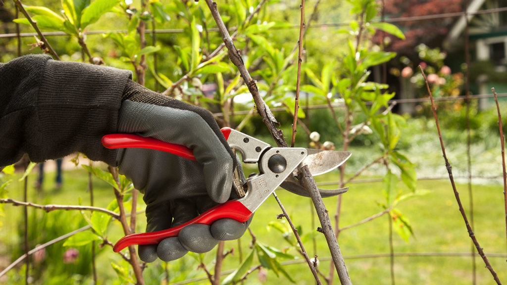 Tree Pruning-Lake Alfred FL Tree Trimming and Stump Grinding Services-We Offer Tree Trimming Services, Tree Removal, Tree Pruning, Tree Cutting, Residential and Commercial Tree Trimming Services, Storm Damage, Emergency Tree Removal, Land Clearing, Tree Companies, Tree Care Service, Stump Grinding, and we're the Best Tree Trimming Company Near You Guaranteed!
