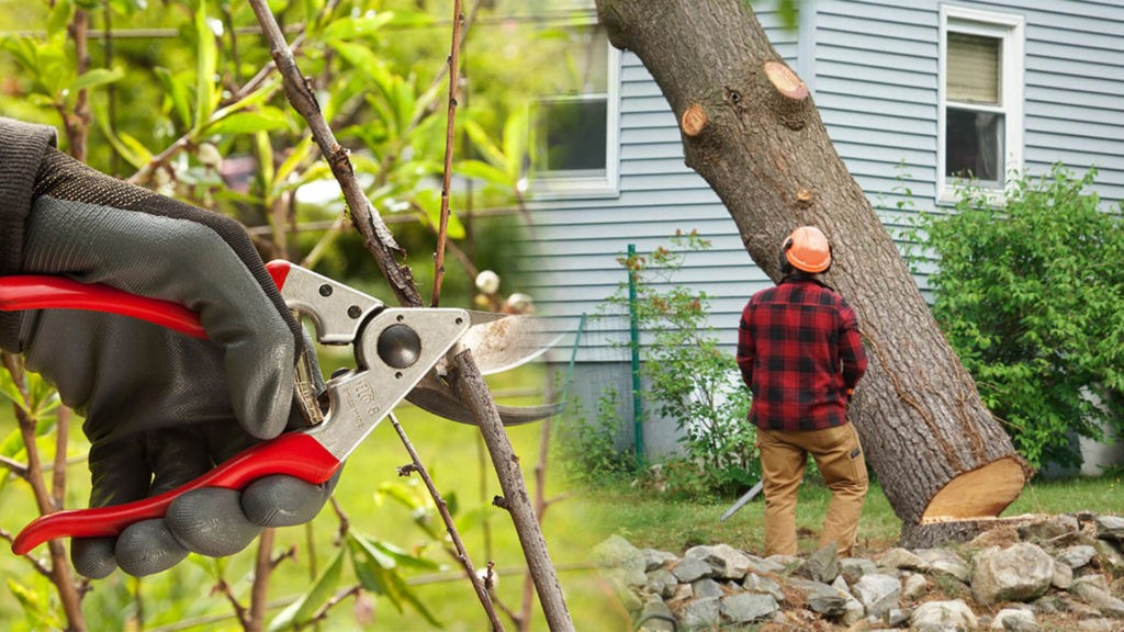 Tree pruning & tree removal-Lake Alfred FL Tree Trimming and Stump Grinding Services-We Offer Tree Trimming Services, Tree Removal, Tree Pruning, Tree Cutting, Residential and Commercial Tree Trimming Services, Storm Damage, Emergency Tree Removal, Land Clearing, Tree Companies, Tree Care Service, Stump Grinding, and we're the Best Tree Trimming Company Near You Guaranteed!